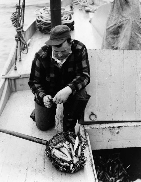 A Mr. Alley is shown at the R.J. Peacock Canning Co. dock in Lubec.