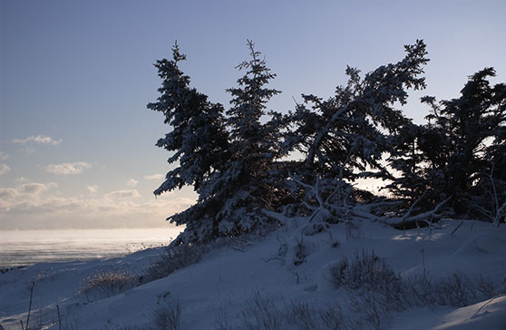 Snow, silhouetted trees and distant sea smoke along the Coastal Trail