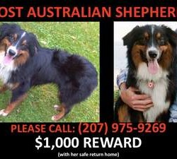 Please Help Find Lost Dog