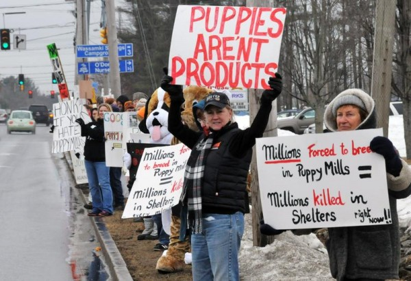North Berwick residents Cheryl Monkiewicz (center) and Julie Fernee (right) were among members of Maine Citizens Against Puppy Mills protesting to stop puppy sales by Little Paws on Payne Road in Scarborough on Saturday, Feb. 23.