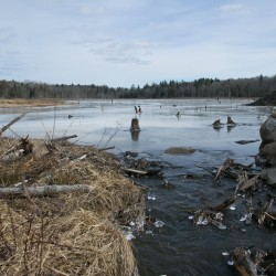 Trapper called for Orrington beavers after dam failure