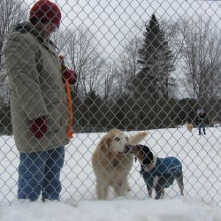 Supporters make case for dog park in Thomaston