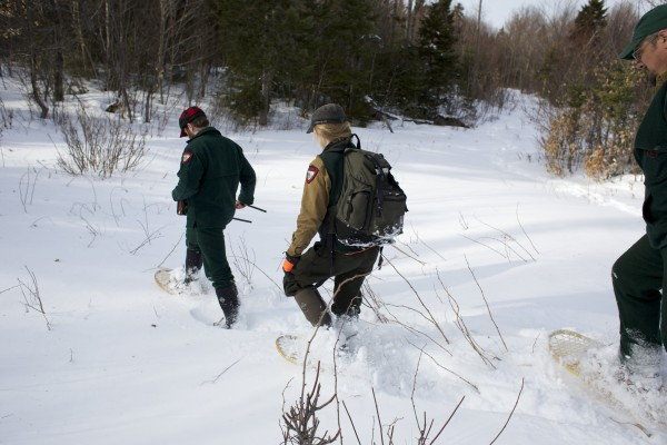 Using an antenna to pick up a radio signal, John Wood (from left), Lisa Bates and Randy Cross hike into an area where they think they'll find a bear's den while studying black bears near Ashland, Maine.