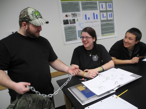 Kevin Isherwood, 21, of Warwick, R.I., examines a piece of chain in a Unity College class as part of his major in captive wildlife care and education. He and students Jen Amidon (center), 21, of Trumbull, Conn., and Alex Bach (right), 21, of Pittsburgh were working on a design for a mobile for elephants.