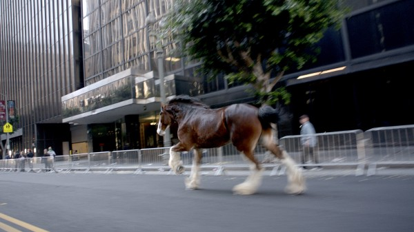Moments in the history of the Budweiser Clydesdale will air during Super Bowl XLVII.