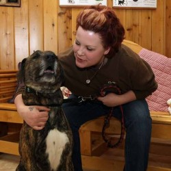 Houlton animal shelter steps up, takes dogs from Arkansas that faced euthanization