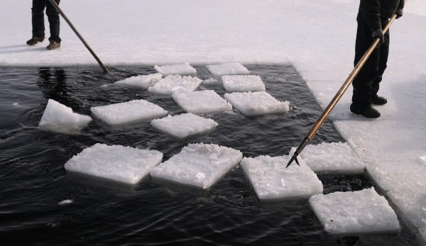 People use pick poles to guide ice blocks to the galamander they use to lift the ice blocks from the water. With the exception of a few minutes use of a chain saw, the ice harvesting tools used by the crew are the same as they would have been in the 1930s.