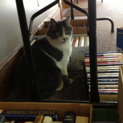 Johnny, HSSC's official mascot, helps put out hundreds of fantastic used books.
