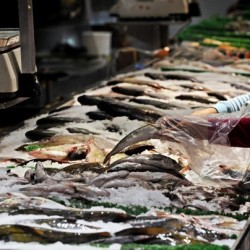 Mass. wants crackdown on mislabeled seafood