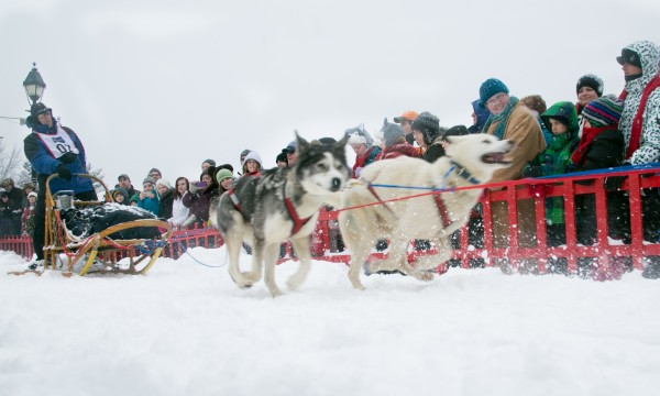 Terry Knowles starts the Can-Am Crown 30-mile race with his dog sled team on Main Street in Fort Kent on Saturday, March 2, 2013.