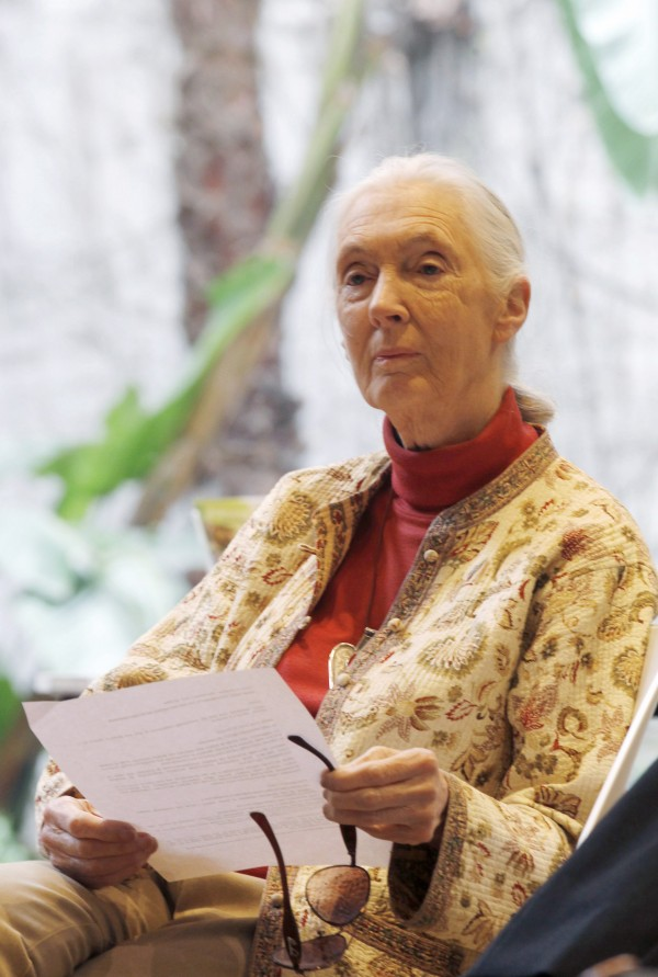 Primatologist Jane Goodall attends a news conference to relaunch the Jane Goodall Institute Spain's campaign &quotSpeak Out in the jungle&quot at the Mobile World Congress in La Casa de Libro, Barcelona February 15, 2013.
