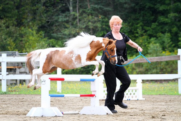 Linda Cameron-Davis with her horse Vermilyea Farm's Valentino competes in a miniature horse jumping class.
