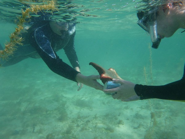 Students from the Maine School of Science and Mathematics work at the Cape Eleuthera Institute and Island School in the Bahamas in January, during the January Term, or J-Term. During J-Term, students dedicate themselves to a particular course or project of their choosing.