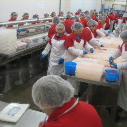 Lobster processor gears up with 90 employees in Gouldsboro