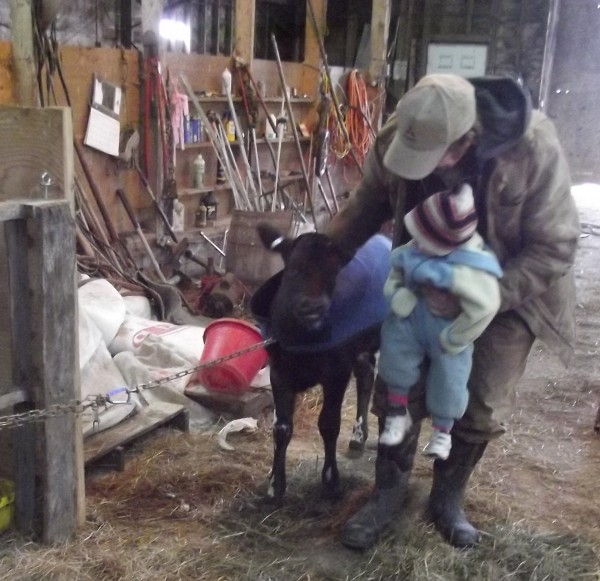 Aaron Bell, an eighth-generation farmer at Tide Mill Organic Farm in Washington County, introduces his not-quite-two-year-old daughter, Ruth, to &quotBean,&quot a Holstein/Jersey cross calf that will eventually join the farm's milking herd. Ruth is one of eight ninth-generation Bells now living on the farm.