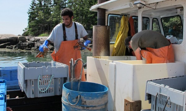 Two crew members of the Jericho III unload their haul of lobster in Stonington, Maine, on Tuesday, Aug. 14, 2012.