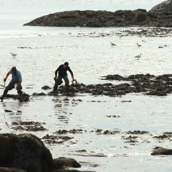As ocean becomes more acidic, will 'dead mud' consume Maine's bountiful shellfish flats?