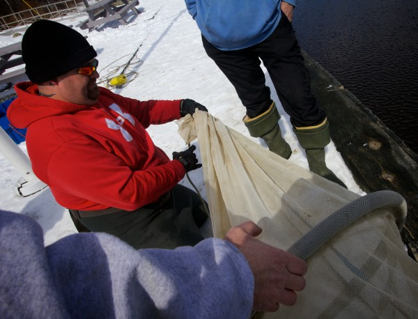 Awesus Mitchell (center) gets tips on how to prepare his elver fyke net from experienced fishermen at the Waldoboro town landing Friday. Mitchell won one of eight Penobscot Nation elver licenses issued this year in a lottery.