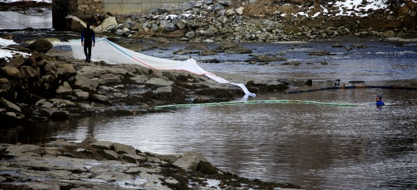 Elver fisherman tend their fyke nets in Waldoboro on Friday, the first day of elver season. The funnel-shaped nets will catch the tiny, translucent fish when the tide flows back in.