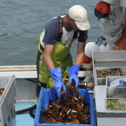 The real promise of a new Maine lobstermen's union
