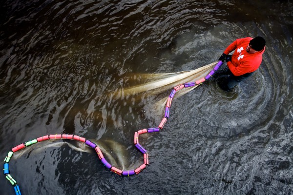 Awesus Mitchell of Indian Island, stretches his elver fyke net out in the Medomak River in Waldoboro Friday, the first day of elver season. Mitchell's first name means &quotblack bear&quot in Penobscot.