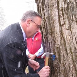 Gov. LePage to tap maple tree to mark season