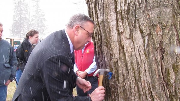 Gov. Paul LePage taps a maple tree on the Blaine House lawn on Wednesday, March 6, 2013, to commemorate the beginning of the sugaring season in Maine.