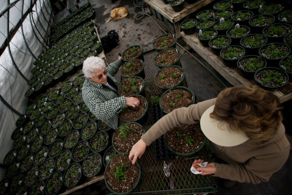Susan Richards and her mother Barbara Moulton transplant seedlings at the Frugal Farmers greenhouse in Buxton Wednesday, the first day of spring. Richards said the recent snow isn't a big problem, but the cold snap makes it hard to maintain temperatures inside her greenhouses