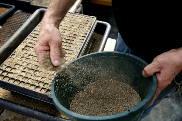 Bruce Richards spreads vermiculite over seeds at the Frugal Farmers greenhouses in Buxton Wednesday.