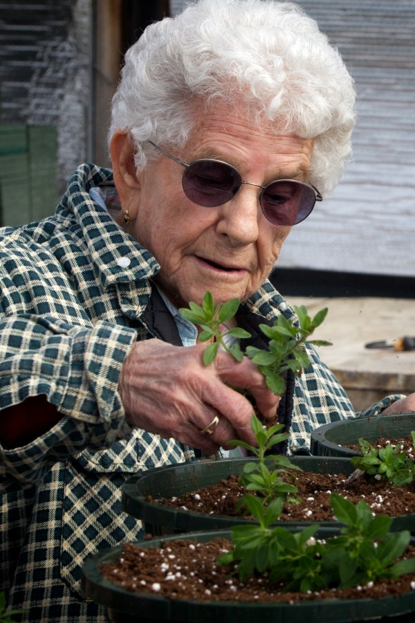 Barbara Moulton transplants seedlings at the Frugal Farmers greenhouse in Buxton Wednesday, the first day of spring.