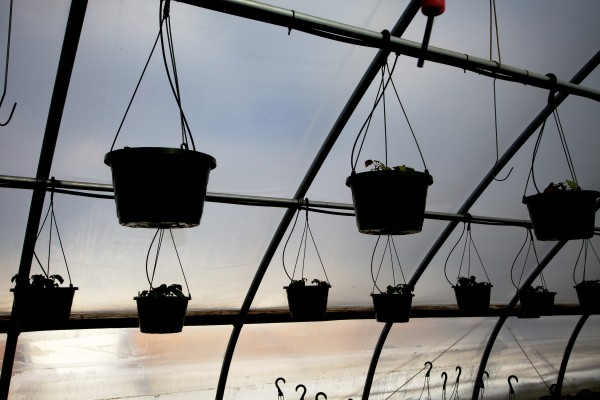 Hanging baskets, which are big Mothers Day sellers, get going at the Frugal Farmers greenhouse in Buxton Wednesday.