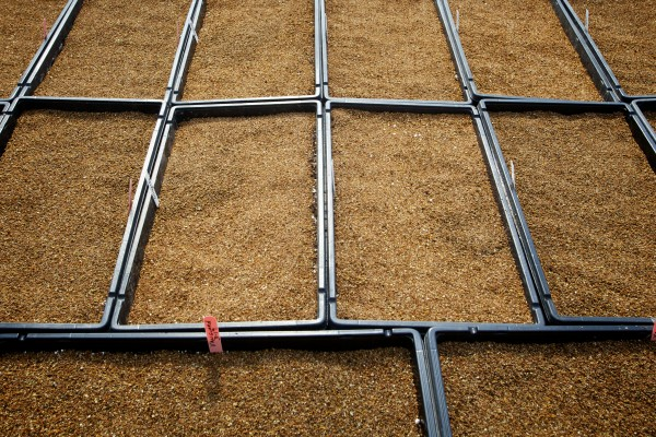 Vermiculite-covered seeds incubate at the Frugal Farmers greenhouses in Buxton Wednesday, the first day of spring.