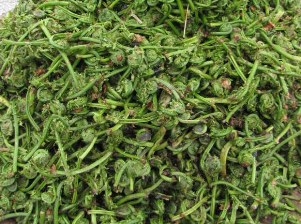 A pile of fiddlehead ferns sits on a table at a roadside stand in Farmington ready for sale in this 2011 Sun Journal file photo.