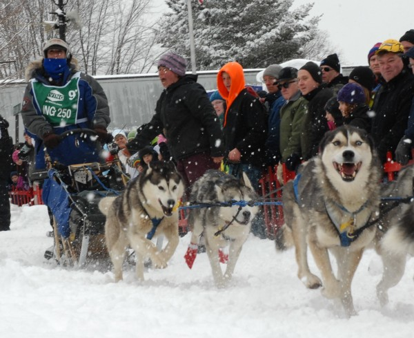 Jaye Foucher of New Portland takes off down the start chute on Main Street in Fort Kent Saturday morning at the Can-Am Crown International 250-mile sled dog race.