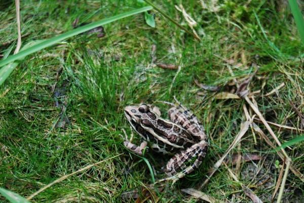 frog at FPAC