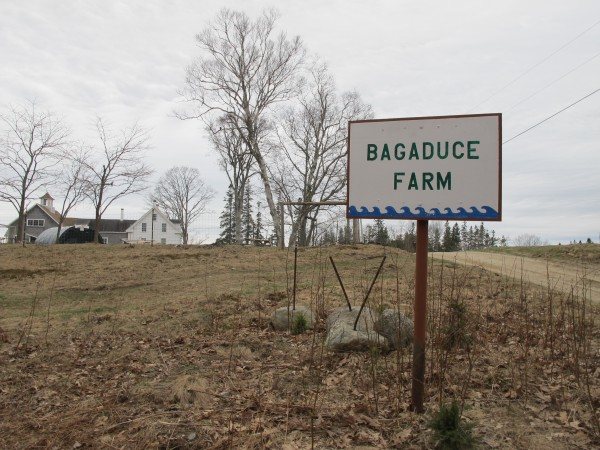 Bagaduce Farm in Brooksville, Maine.