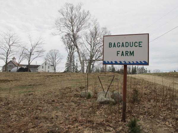Bagaduce Farm in Brooksville, Maine.