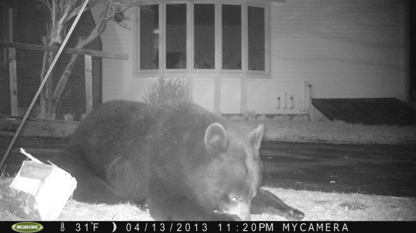 Ford Stevenson captured these images of a bear at his mother Priscilla Stevenson's, home in Wayne, Maine earlier this month.