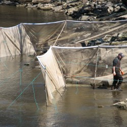 Tribes adopt individual quotas as Maine's 2014 elver season begins