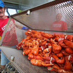 Growing number of lobstermen looking to unionize, gain voice in Augusta
