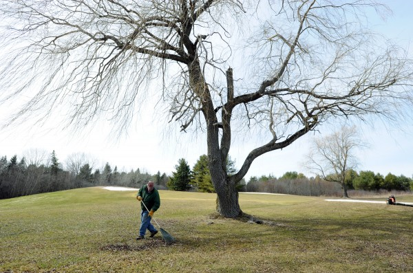 Robert Irwin, grounds crew, rakes up sticks at Bangor Municipal Golf Course on Thursday in preparation for the start of the season.