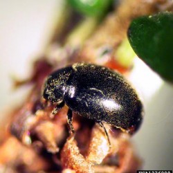 Beetles ravaging forests around Mount Rushmore, drain budgets as West tries to fight back