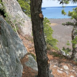 Rangers with Acadia National Park are trying to find out who recently cut trees and limbs at the South Wall climbing area on Champlain Mountain.