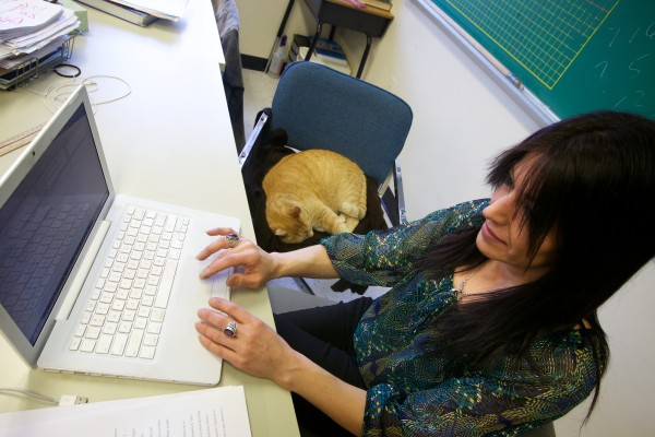 Simba the cat snoozes atop his favorite chair as Tina Soucy teaches a math class Thursday at Westbrook High School. He's been visiting Soucy and the school everyday for 13 years.