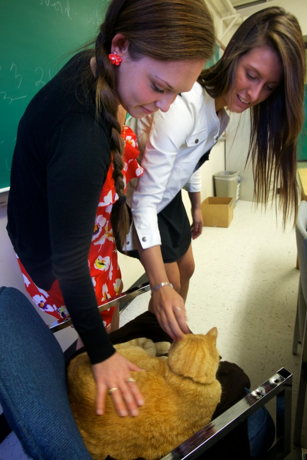 Westbrook High School seniors Kelsey Maynard (left) and Kelsie Beaumier give Simba the cat some attention before their math class starts Thursday.