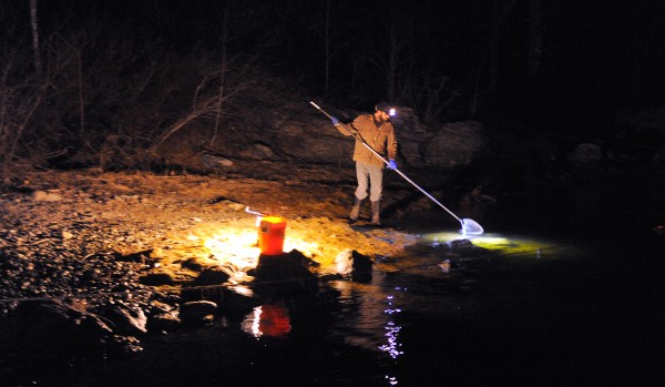 Solomon Dragon of Orland fishes for elvers with a dip net in Surry.