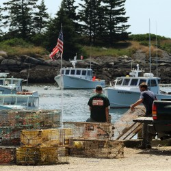 No lobster would admit to being from Connecticut. Let's steward the Maine lobster brand, or shut our traps