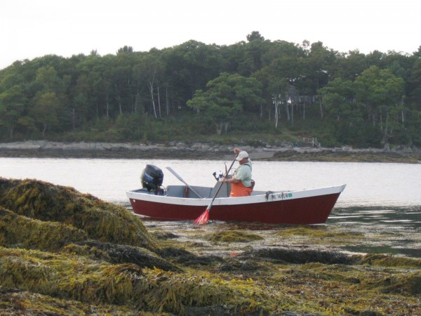 Tom Roth, owner of VitaminSea, harvests seaweed off rocks near Clapboard Island in Casco Bay.