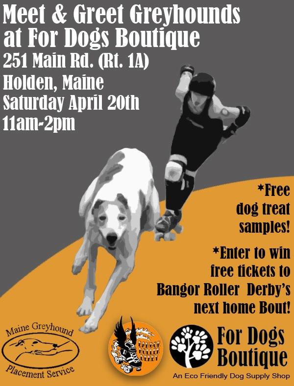 Meet the Greyhounds & Bangor Derby