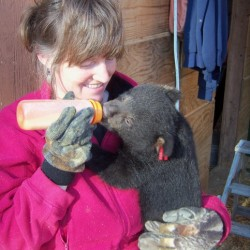 Dawn Brown Licensed Maine Bear Rehabilitator from Second Chance Wildlife, Inc. In New Sharon , Maine will be one of the presenters at the Belfast Free Library on Tuesday May 7th at 6:30 pm.